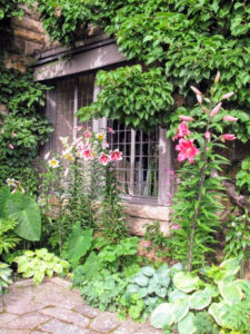 Here are more true lilies growing outside this leaded window, with a variety of hostas below.