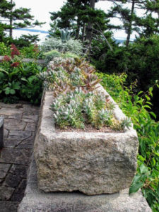 I purchased this long trough a few years ago from the Trade Secrets rare plant and gardening antiques sale in Sharon, Connecticut. It always looks so beautiful planted with succulents. This year, I wanted it planted in color blocks with pink gravel – the same pink gravel that covers the carriage roads at Skylands.