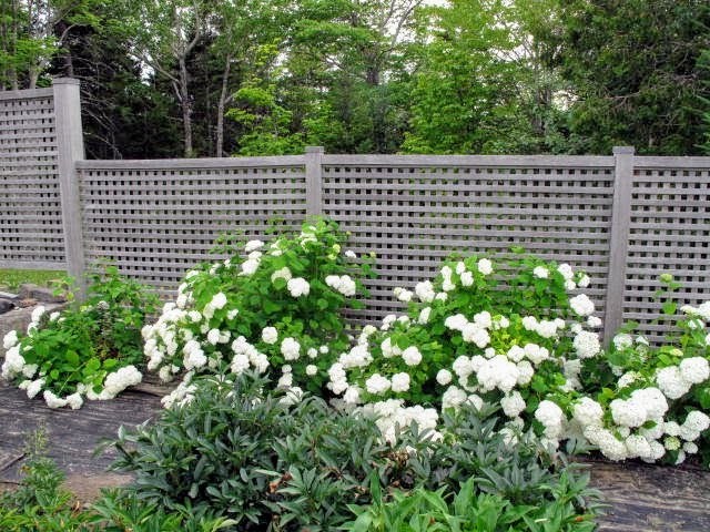The Martha Stewart Blog Blog Archive Decorating With Flowers