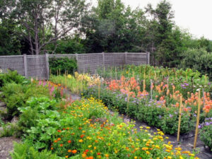 At Skylands, the vegetable garden and the flower cutting garden are in the same location, all protected by this good, strong fence.