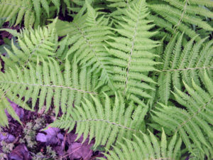 Beautiful ferns - I love this all natural environment.