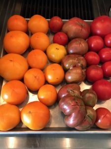 "Here they are back on the tray - look at the ""x"" mark on the bottom of each tomato."