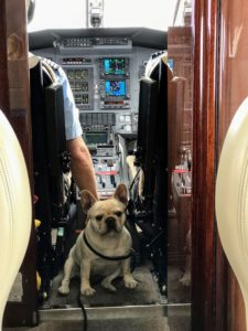 My dogs came along for the ride. Here is Creme Brûlée in the cockpit just before lift off.