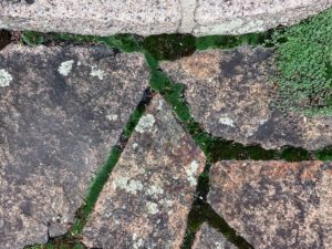 """The """"cracked ice"""" on my terrace floor is covered in moss."""