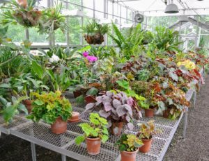 The walking tour started in my main greenhouse to see my expansive and ever-growing collection of tropical plants.