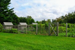 The tour continued onto the vegetable gardens. We've picked many of the summer vegetables, but it continues to thrive.