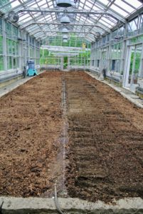 The soil in this greenhouse is about two-feet deep. Wilmer tills the top six to eight inches of compacted soil, which is filled with nutrient-rich compost.