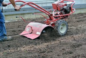 Any remnants of vegetables from last season were removed from the area before tilling began. This makes it easier for the rototiller to do its job, and prevents anything from getting caught in the machine.