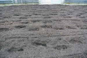 It looks great after both passes. The fertilizer and manure added earlier are now well-mixed into the soil.