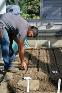 Wilmer sprinkles the seeds in the furrows and then gently covers the rows with soil.