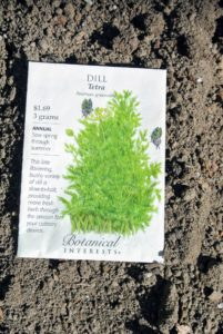 "We also planted some herbs including Botanical Interests dill ""Tetra"". This is a bushy, late flowering variety, meaning more leaf production for dill lovers. It is heat tolerant which makes it slow-to-bolt, so you will enjoy fresh picked, aromatic dill throughout the season."