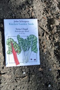 "John Scheepers exclusive Swiss Chard ""Kaleidoscope Blend"" contains a mix of colorful stems and is perfect for planting in small space gardens."