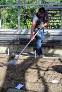 Once the seeds are all planted, using a gardening rake, Wilmer carefully smooths out the soil over each bed.