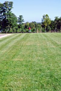 Aeration is an extremely vital element to a healthy lawn. It allows air and water to penetrate built-up grass.