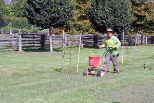 Here he is starting off in the areas where Dawa already aerated. A good time to lime a lawn is in the fall, before the first frost, so the soil has all winter to absorb the treatment.