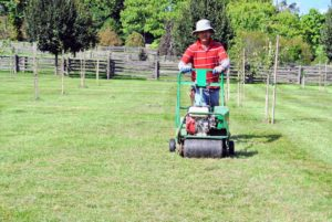 Newly established sod lawns, lawns that get a lot of use, or lawns that dry out easily because of location, should all be aerated regularly.