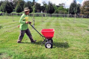 Overseeding is generally done to improve the existing lawn, thicken the density, and reduce or eliminate weeds or undesired grasses.