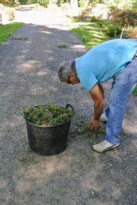 Once a section of old grass and weeds has been pulled and raked from the edge of the road, Fernando collects the clippings in a trug bucket for the compost pile.
