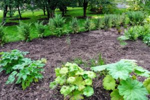 Here is a newly weeded section of the garden bed - it looks so much better.