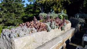 This is the stone trough I bought at Trade Secrets several years ago. It has worked perfectly here at Skylands, and looks beautiful planted up with succulents. This year, I wanted it planted in color blocks with pink gravel – the same pink gravel that covers the carriage roads at Skylands.