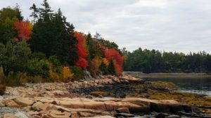 This is Bracy Cove, a bay located within Hancock County, Maine, near Seal Harbor - such a pretty early morning photo.