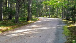 The foliage looks so pretty when the driveway is covered in pink. The process of picking up all the gravel along the mile of carriage road is a big task. Along all the carriage roads, the gravel is blown to the center - first on one side...