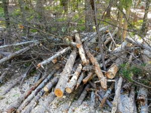 All along the one mile of road, piles of felled trees, branches and other debris were prepared to be chipped and returned to the ground as mulch.