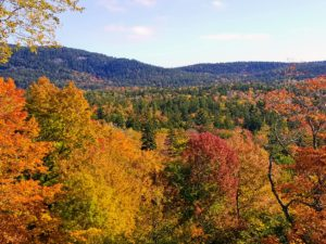 And here is more fall foliage seen over the the woodland - the fall colors are still so beautiful.