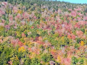 Here is a view of the fall colors from afar - the trees are definitely not as vibrant as past years.