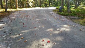 This is what my carriage roads look like as each load of crushed pink gravel is picked up. These roads are ready for the winter season ahead.