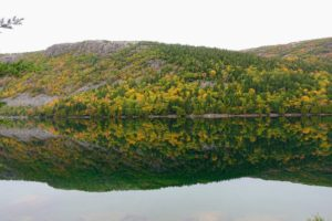 So calm and beautiful - here's another perfect reflection of the tree line in the water.