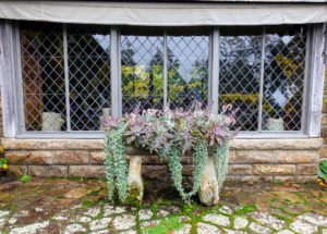 """After lunch, I walked out onto my expansive """"ice terrace"""" to see how the succulents had grown - look how beautiful they are in this antique planter. They grew so much since I planted them in May."""