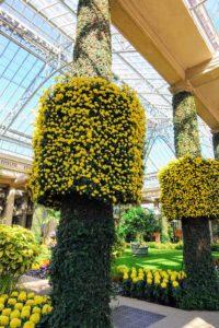 These are columns wrapped in cascade anemone mum, Chrysanthemum × morifolium 'Megumi', Orangery.