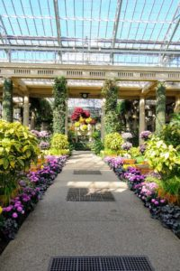 This is the Center Walk, in the Main Conservatory. Longwood's Conservatory contains at least 4,600 different types of plants and trees.
