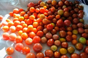 This is a closer look at the tomatoes - all washed and free of stems. Do you know... according to the U.S. Department of Agriculture, most Americans eat between 22 and 24 pounds of tomatoes per person, per year? This amount includes tomatoes in sauces - that's a lot of tomatoes!