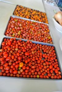 Once the tomatoes are all cleaned and dried, they are ready to season.
