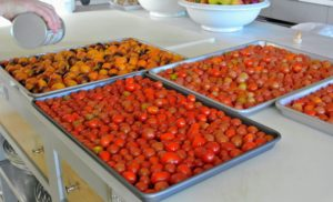 Here are more trays of tomatoes, with more olive oil drizzled on top.