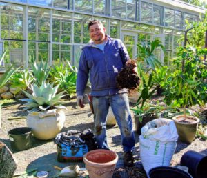 Before each plant gets placed into the hoop house, it is examined, and if necessary, repotted. There are a lot of plants in line to repot, so Wilmer oversees this process as other plants are moved indoors.