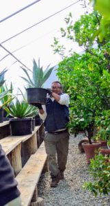 Here is Pete bringing in another agave. Agaves are so beautiful, but they should be kept in low traffic areas, as their spikes can be very painful.