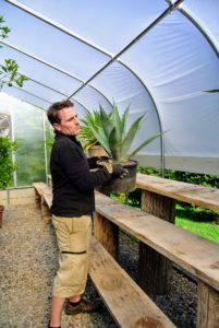 Ryan oversees the moving of all these plants. Here, he is placing potted agaves on shelves made with lumber and tree stumps cut at the farm from felled trees. It is a very natural and economical way to repurpose old wood.