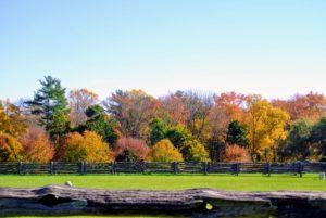 The perimeter around my paddocks displays such wonderful shades of orange, yellow, amber, brown and green.
