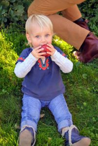 Kit loves snacking on this fresh Gala apple grown right here at the farm.