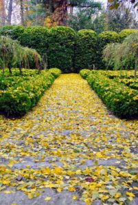 The path leading out of the garden is also covered in yellow.