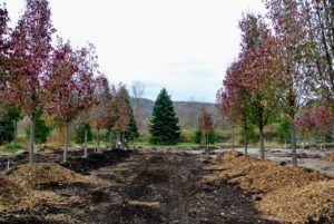 The facility is located on more than 40-acres of land. Its helpful staff assists landscape professionals in selecting plant material, designing landscape spaces and delivering orders to the site.