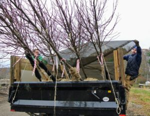 They also cover it with the dump truck's tarp to ensure the branches are safe and secure.