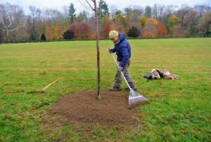 """Bare to the flare"" is the general saying when planting trees - the top of the root flare should always be above ground. Phurba then rakes the soil surrounding the tree so it is neat and tidy."