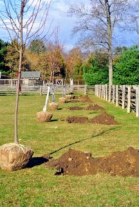 All the holes are dug and the trees positioned - ready to be planted. When selecting a location, always consider the tree's growth pattern, space needs, and appearance.