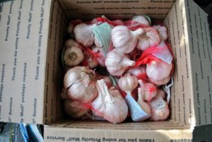 It's always exciting to get a box from Keene Organics filled with a variety of garlic bulbs for my garden. The box comes complete with an informational pamphlet explaining how to prepare and plant the garlic. https://www.keeneorganics.com