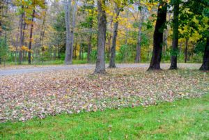 As colder weather approaches, and sunlight decreases, trees that drop their leaves seal the spots where the leaves are attached, which causes them to change color and fall to the ground.