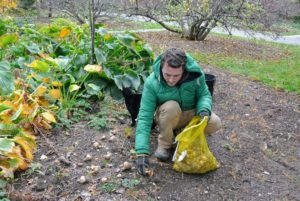 Ryan places some of the bulbs strategically around the garden bed - here he is in the bed behind the Stewartia garden.